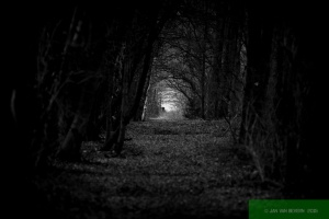 Hollow Way / Hohlweg