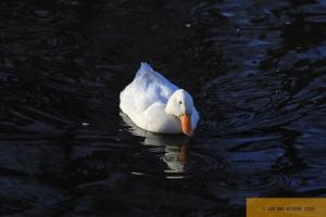 Gestatten, auch Duck! - Part II