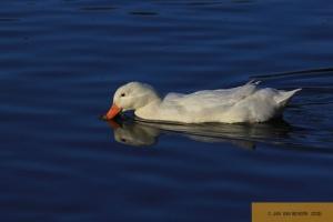 Gestatten, auch Duck! - Part III