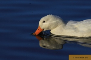 Gestatten, auch Duck! - Part IV