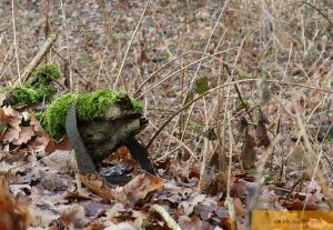 Frosch oder Igel ?